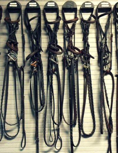 Our Selection of Bridles